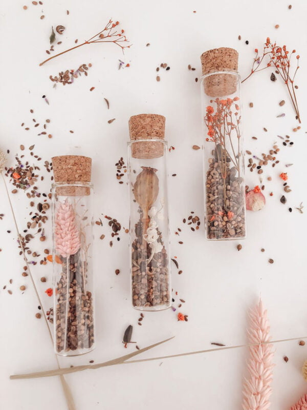 bloemzaden-droogbloemen-glazen-buisje